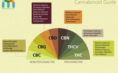 What is the Endocannabinoid System and How Does it Work?