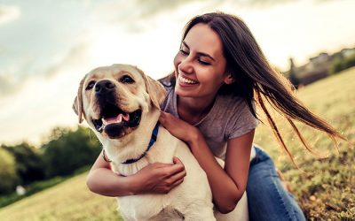 CBD for Dogs Becoming More Appealing to Pet Owners